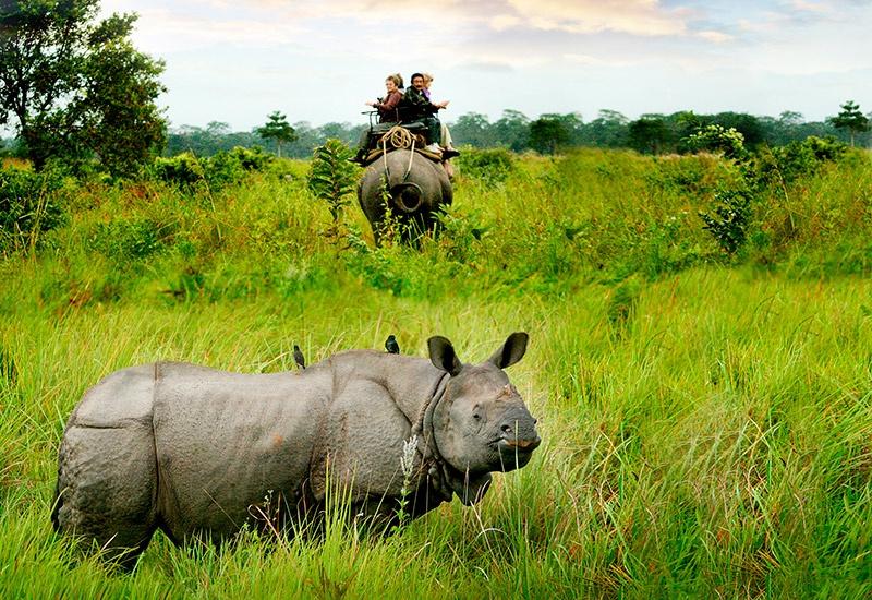 Assam Despatch Cruise 2 - Rhinos and More (Upstream)