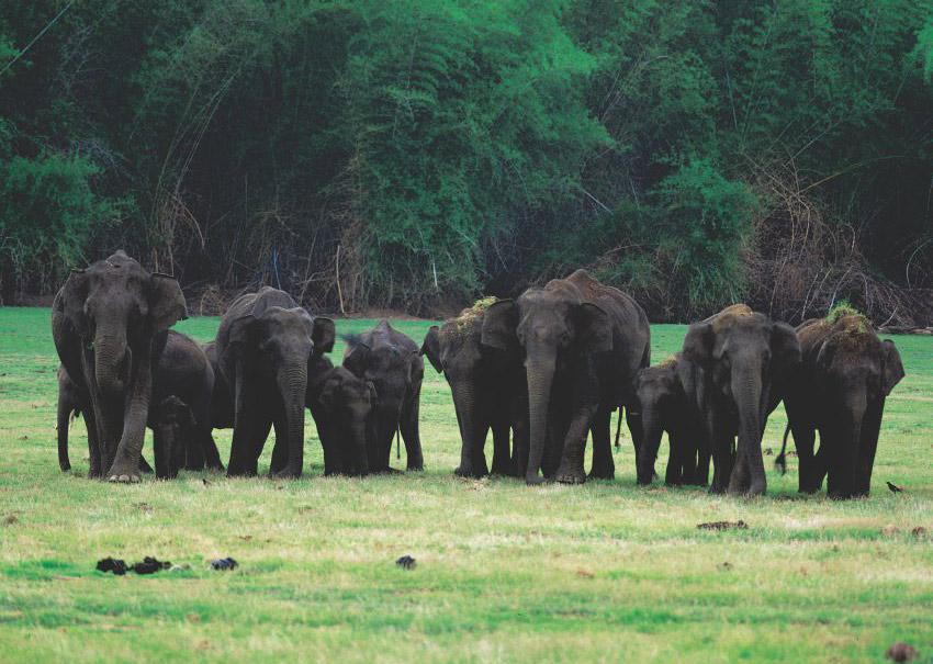 Elephants - Wild life