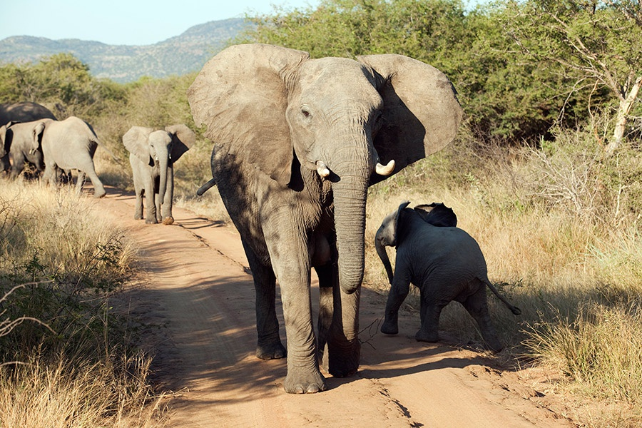 South Africa Safari Getaways
