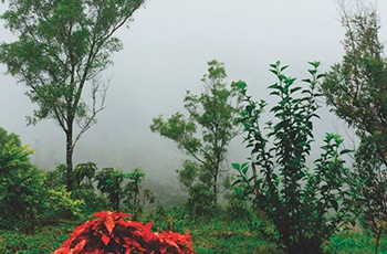 Bangalore Ooty Coorg and Mysore