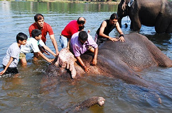 Dubare Elephant Activities