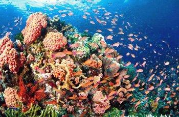 Coral Reefs Andaman