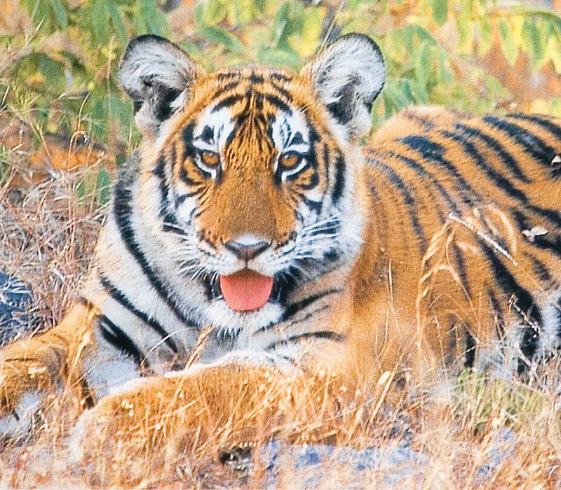Bandipur Tour from Mysore