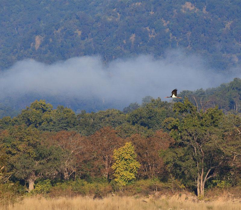 Misty Forest Corbett