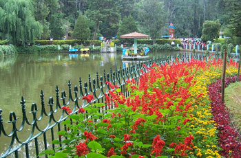 ooty holiday package