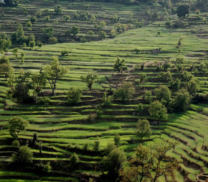 Uttrakhand Landscape