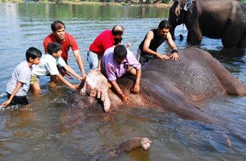 Dubare Elephant Interaction