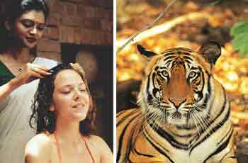 Wild Life Ayurveda Tour