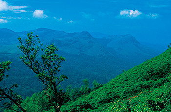 Cool Coorg
