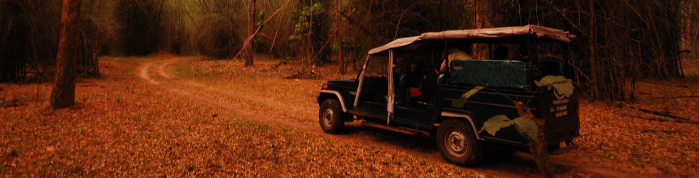 Jeep Safari  to Dubare fores