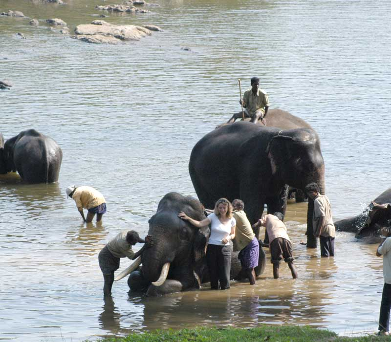 Elephant Interaction Dubare