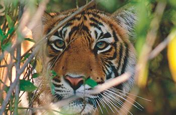 wildlife delhi